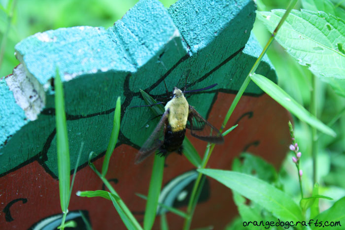 Bee Moth, orangedogcrafts.com
